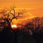 26 januari 2015, Vrij thema, titel: African sunset in Belfeld, Jacques Hensen