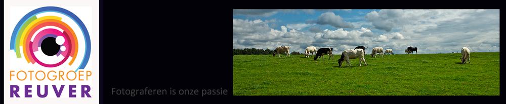 banner2 koeien