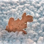 """Thema 25 januari 2016, Vrij werk door Huug, titel """"sneeuwblad"""""""