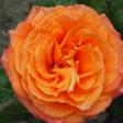 bloem2
