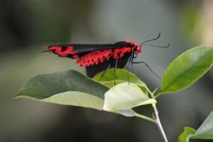 ineke-foto-5a-page-vlinder